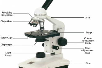 Microscope Parts Function : 5 Labeled Parts Of A Microscope ...