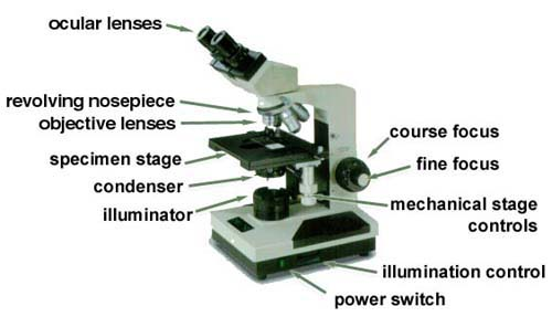 Microscope labeled 5 labeled parts of a microscope biological