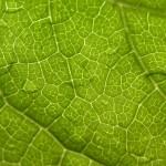 natural green leaf landscape , 7 Green Leaf Landscaping In Plants Category