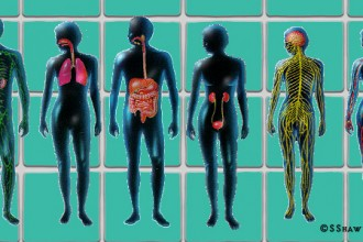Organ Systems Of The Body , 6 Pictures Of Organ Systems In Organ Category