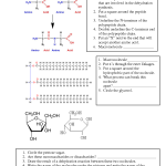 organic chemistry worksheet , 6 Organic Macromolecules Worksheet In Scientific data Category