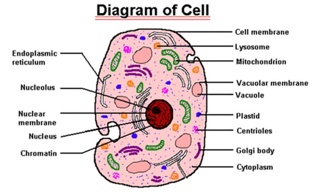 parts of cell