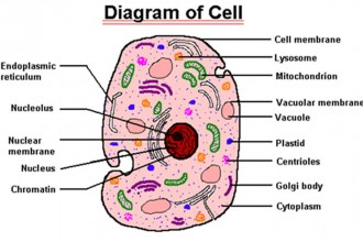 parts of cell in Plants