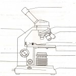 parts of the microscope quizlet , 5 Parts Of The Microscope Quiz In Cell Category
