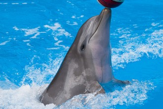 playful bottlenose dolphin in Cell