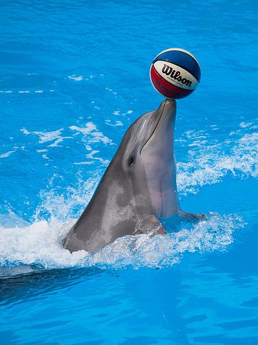Mammalia , 6 Bottlenose Dolphin Facts For Kids : Playful Bottlenose Dolphin