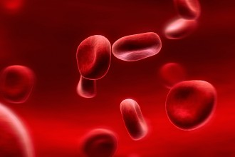 Red blood cells in Primates