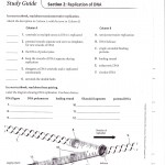 rna structure notes , 6 Rna Worksheet In Genetics Category