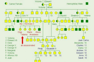 Genetics , 6 Genotype Of Hemophilia : royal hemophilia