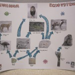 savannah food web worksheet , 6 African Savanna Food Webs In Ecosystem Category