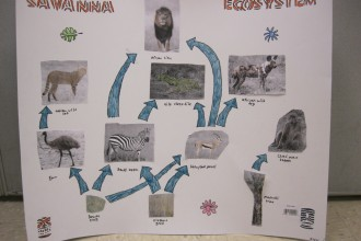 savannah food web worksheet in Ecosystem