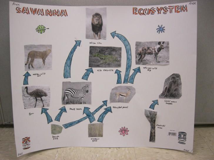 Ecosystem , 6 African Savanna Food Webs :  Savannah Food Web Worksheet