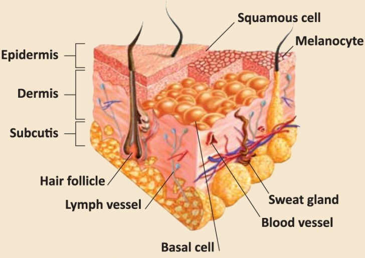 BioCoach Activity