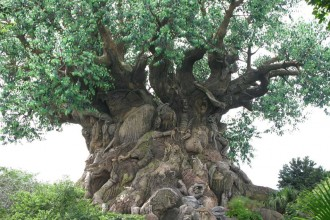 The Meaning Of Life , 5 Tree Of Life In Plants Category