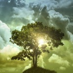 the tree of life , 5 Tree Of Life In Plants Category