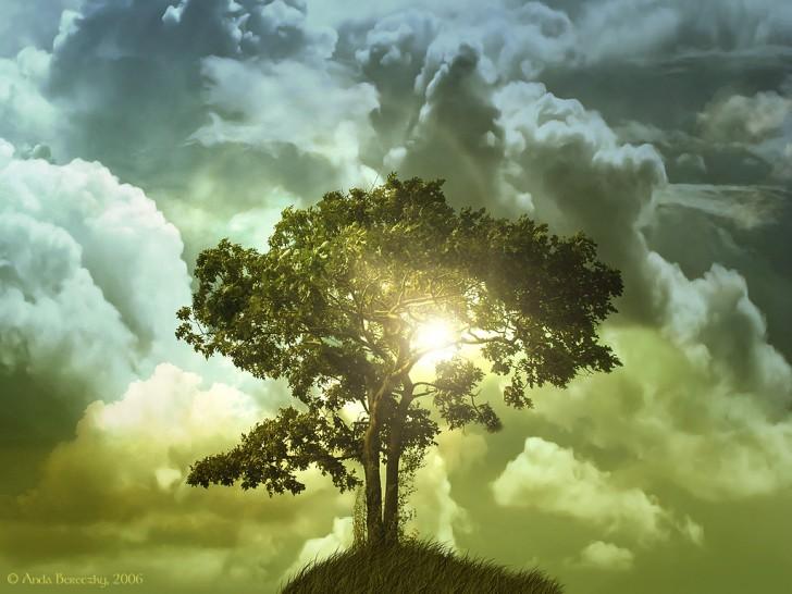 Plants , 5 Tree Of Life : The Tree Of Life