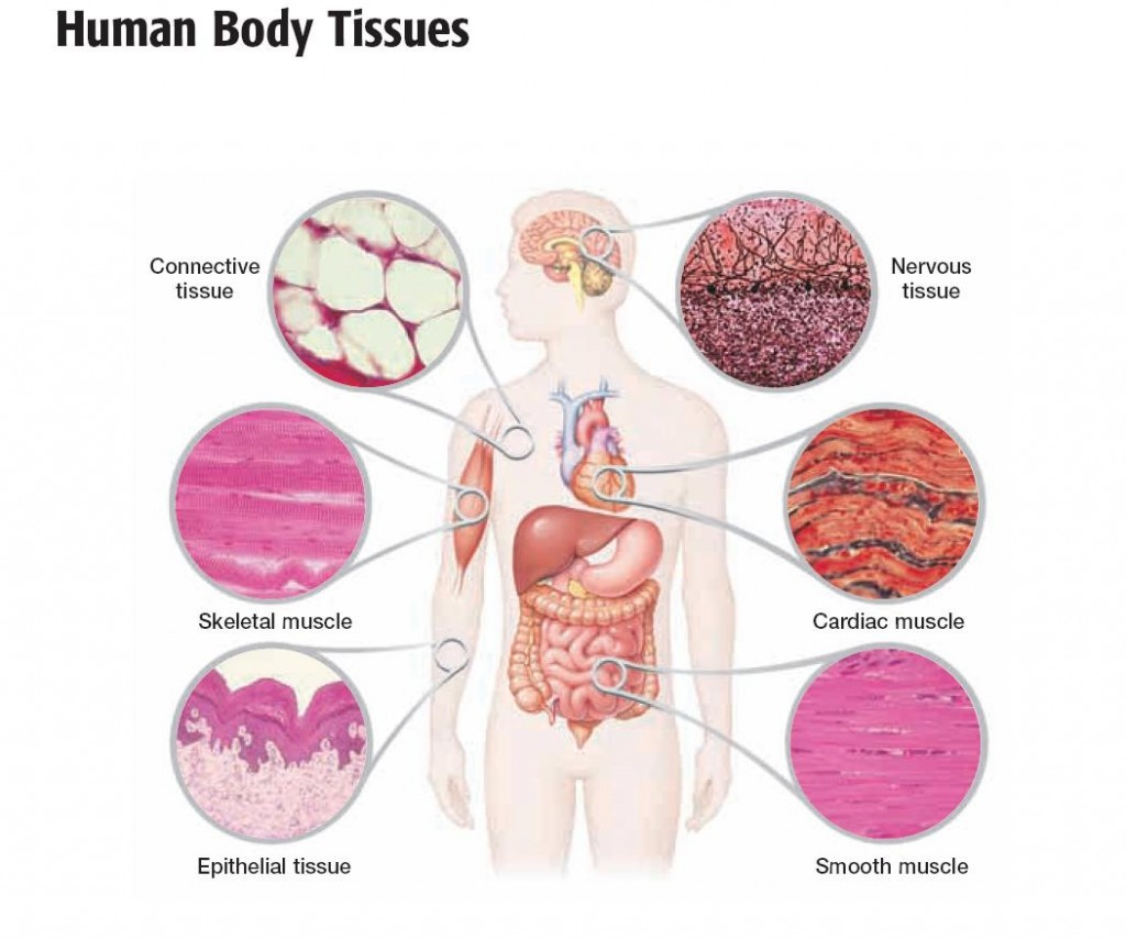 tissues and epithelial