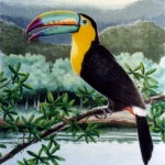 toucans facts photos , 6 Toucan Facts For Kids In Birds Category