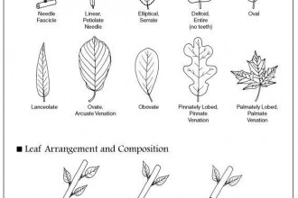 Tree Leaves Identification , 7 Leaf Tree Id Key Review In Plants Category