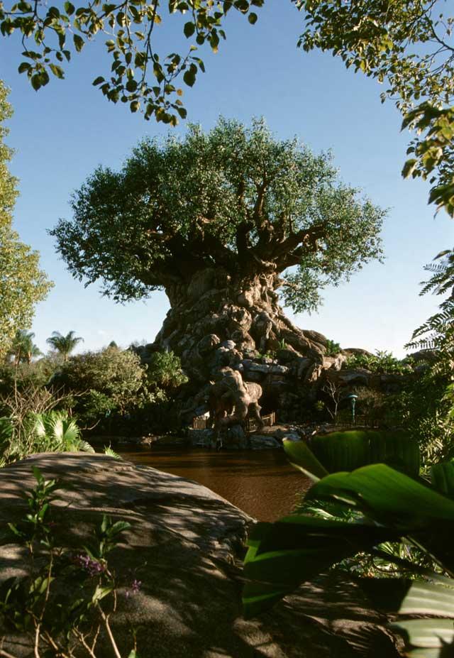 Plants , 5 Tree Of Life : Tree Of Life