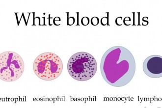 types of white blood cells in Cat