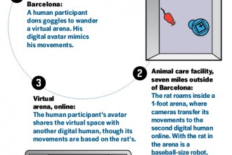 virtual rat reality in Human