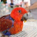 Baby Scarlet Macaw , 6 Cute Baby Macaws In Birds Category