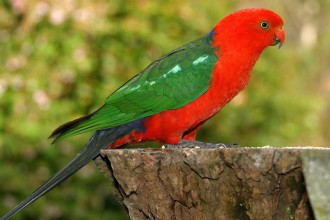 Beautiful Parrot , 7 Unique Quaker Parrot Talking In Birds Category