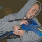 Blue Hyacinth Macaw , 7 Charming Blue Macaw Facts In Birds Category