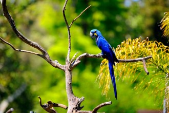 Blue Macaw , 8 Beautiful Blue And Gold Macaw Facts In Birds Category