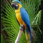Blue Macaw , 7 Cool Pictures Of Macaws In Birds Category