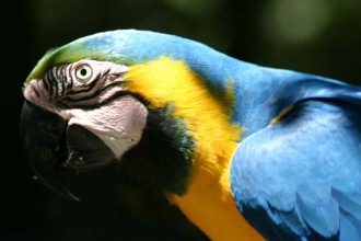 Blue and Gold Macaw head in Dog