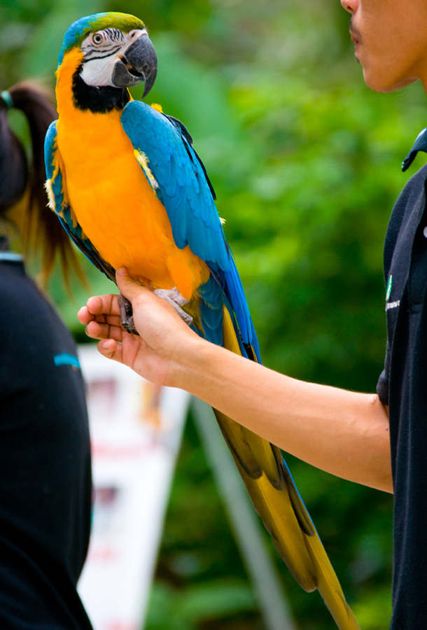 Birds , 8 Beautiful Macaw Facts : Blue And Yellow Macaw
