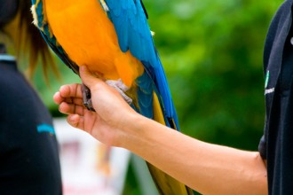 Blue and Yellow Macaw in Cell