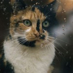 Calico Cat Art , 7 Awesome Calico Cat Pictures In Cat Category