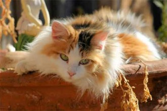 Calico Cat in Spider