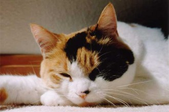 Calico Cats in Bug