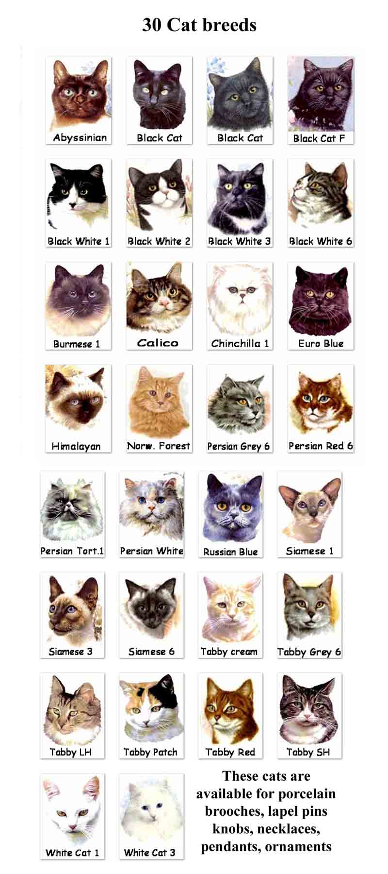 Cat Breeds 6 Best List Cat Breeds With