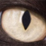 Cat Eye Syndrome science , 5 Fabulous Cat Eye Syndrome Pictures In Cat Category