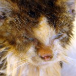 Cat Mange , 5 Cat Mange Pictures To Consider In Cat Category