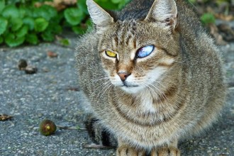 Cat with Eye Infection in Beetles