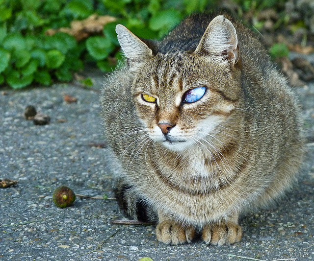 Cat with Eye Infection