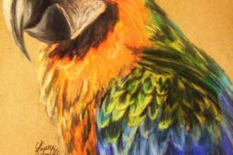 Catalina Macaw , 8 Wonderful Miligold Macaw In Birds Category