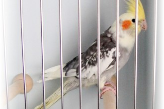 Cockatiel Cottage Page in Cell