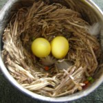 Cockatiel eggs  , 7 Amazing Cockatiel Eggs In Birds Category
