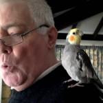 Cockatiel talking , 7 Fabulous Cockatiel Talking In Birds Category