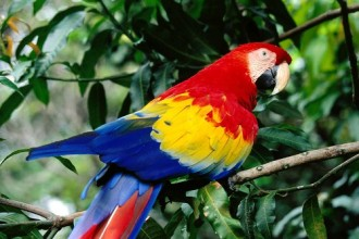 Colorful Scarlet Macaw in Plants