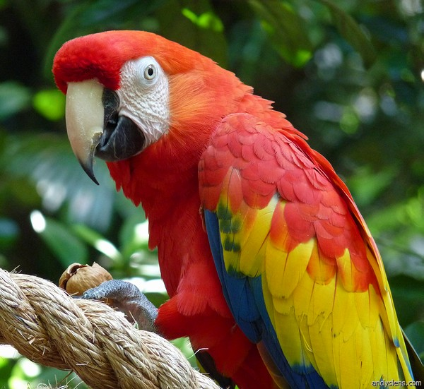 CostaRica Parrot : 6 Facts About Macaws | Biological ...