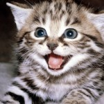 Cute Cat Funny Pictures , 8 Cute Cat Pictures With Captions In Cat Category