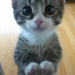 Cute Cat Picture , 7 Top Cutest Cat Picture Ever In Cat Category